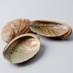 coquilles-dormeaux-sauvage
